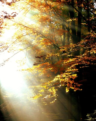 Fall Footsteps ~ The Light on Our Path